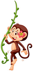 Cute monkey climbing the vine