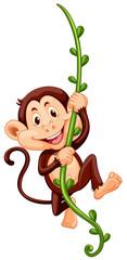 Monkey climbing up the vine