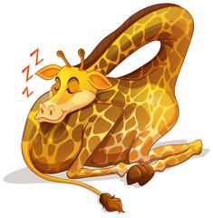 Cute giraffe sleeping alone