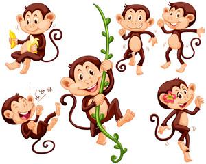 Little monkeys doing different things