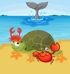 Sea animals on the beach