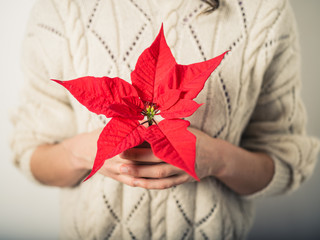 Young woman with poinsettia