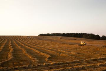 cereal harvest. Sunset
