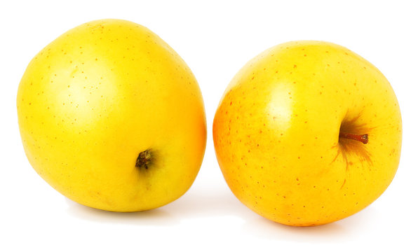 two yellow apples on a white background