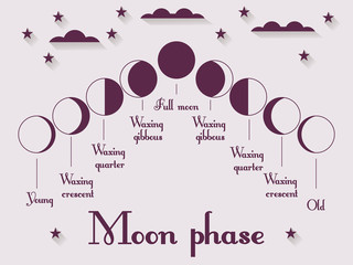 The phases of the moon. Vector illustration.