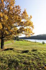 autumn season  forest