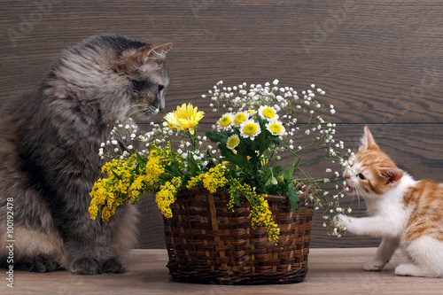 Смешные коты в цветах