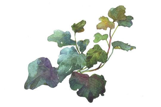 sprig of ivy