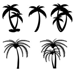 palm tree vector in black color