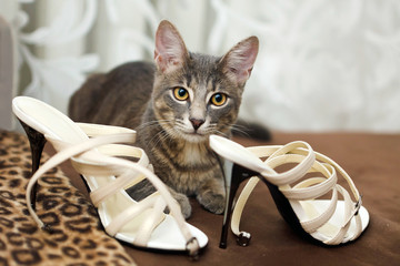 cat and bride wedding shoes.