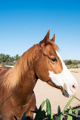 Horses on a farm