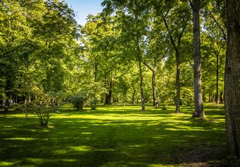 Forest Park Landscape