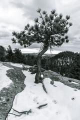 Lone Tree in Winterscape