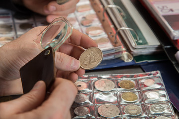 Two numismatists examines  collection of coin Wall mural