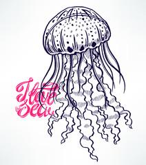 beautiful sketch jellyfish