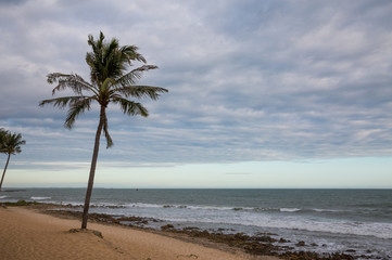 Palmen am Sandstrand in Vietnam bei Phu Hai
