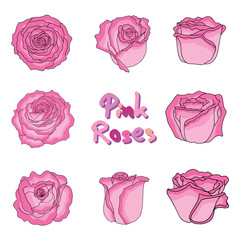 Set of fresh pink roses in hand-drawn style