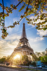Wall Mural - Eiffel Tower with spring tree in Paris, France