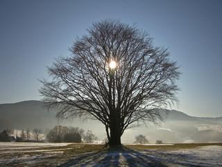 sun behind tree in winter