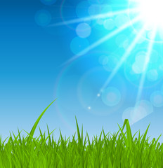 Summer Abstract Background with Grass. Vector Illustration