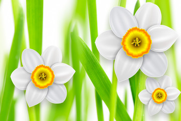 Flowers background, white spring flowers and green grass.