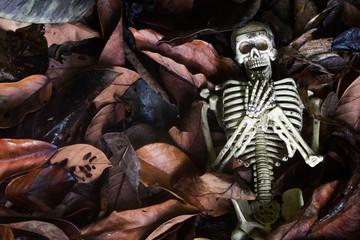 skeletons on Dry leaf background