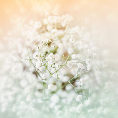 dreamy and blurred image of spring flowers. vintage filtered and toned