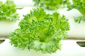 close-up of salad greens