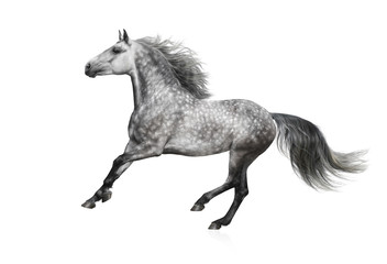 Fotoväggar - The grey Andalusian stallion gallops on white background
