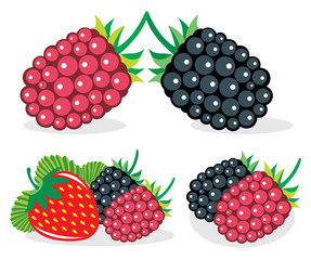 Mixed berries vector illustrations