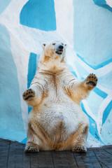 Polar bear standing on its hind legs