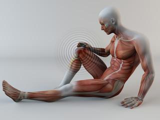 Corpo umano, dolore ginocchio, muscoli, strappo muscolare