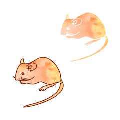 Rat, mouse - sketch, the drawing in color (watercolor 1)
