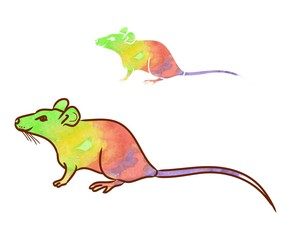 Graphic image mouse, rat. Silhouette of three lines on a white background. Vector illustration.