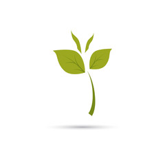 Color illustration of plant