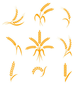 Abstract wheat ears icons