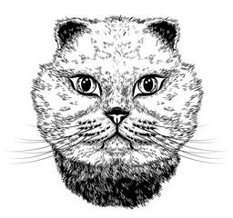 Foto op Canvas Hand getrokken schets van dieren Cat portrait