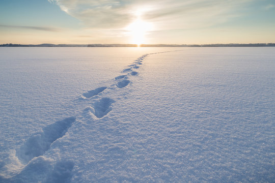 Footsteps on snow at a frozen lake in Finland at a sunny day in the winter.