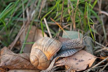 macro snail