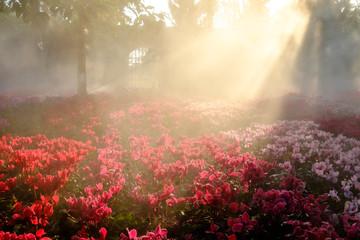 The romantic pink flowers on sunrise