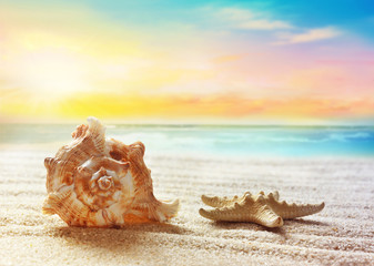 Seashell on the summer beach