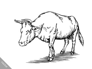 black and white engrave isolated cow