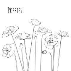 Line-art Poppies Isolated On White. Vector illustration