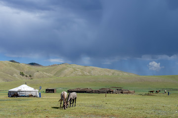 mongolian yurt and horses