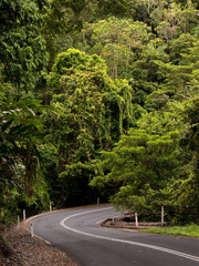 Road through dense rainforest near Cairns, Queensland, Australia
