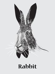 hand drawn rabbit portrait