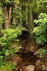 rainforest creek, near Cairns, North Queensland, Australia