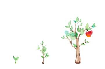 木の生長とリンゴ