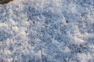 The texture of the snow surface close up