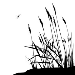 Reed and flying dragonfly - vector illustration, black and white